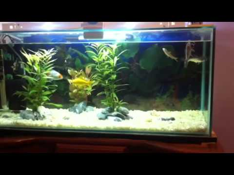 aquarium poisson eau douce youtube. Black Bedroom Furniture Sets. Home Design Ideas