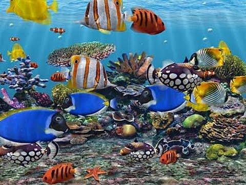 Thế giới muôn màu dưới đáy đại dương 1 .ngoi sao ca vat