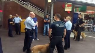 POLIZEI + POLIZEIHUNDE VS MIGRANTEN - Widerstand gegen Vollstreckungsbeamte