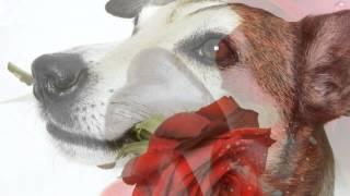 Savage Rose - Nattergalen fra Kosova