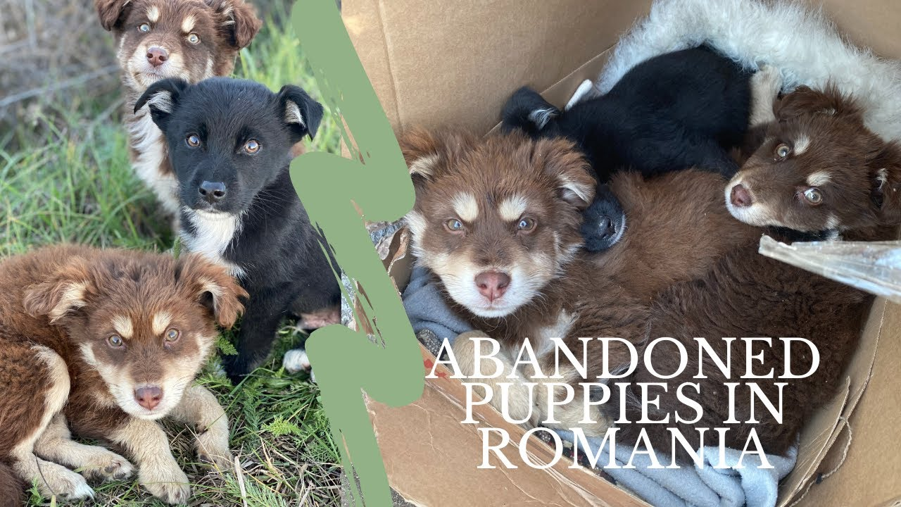 We Found Three Abandoned Puppies!
