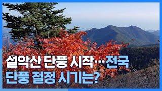 [시선두기] 설악산 단풍 시작…전국 단풍 절정 시기는?…