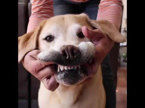 DIY ToothPaste for Pets - YouTube