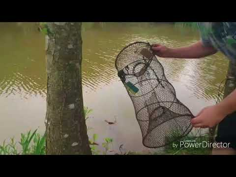 UKCA Trapping The American Signal Crayfish Using Salmon Oil