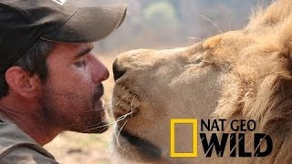 LIVING WITH LIONS -  Kevin Richardson - National Geographic WILD HD 2017 ♥