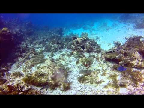 Cancun Scuba diving coral reef dive near isla mujures