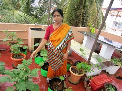 Devaki Madam's Tips to Setup a Terrace Gardening!