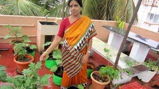 Devaki Madam's Tips to Setup a Terrace Gardening!