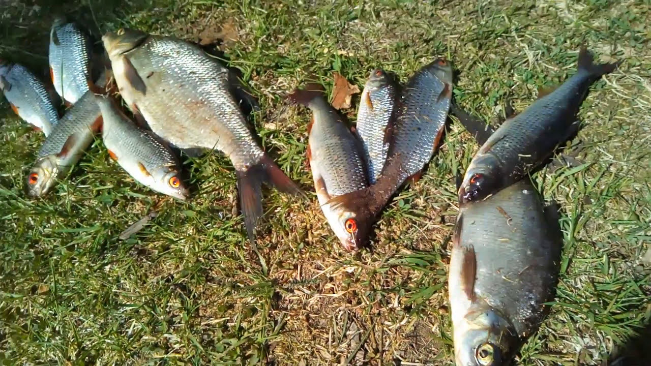 Рыбалка на озере Хепоярви 1 июня 2017года.