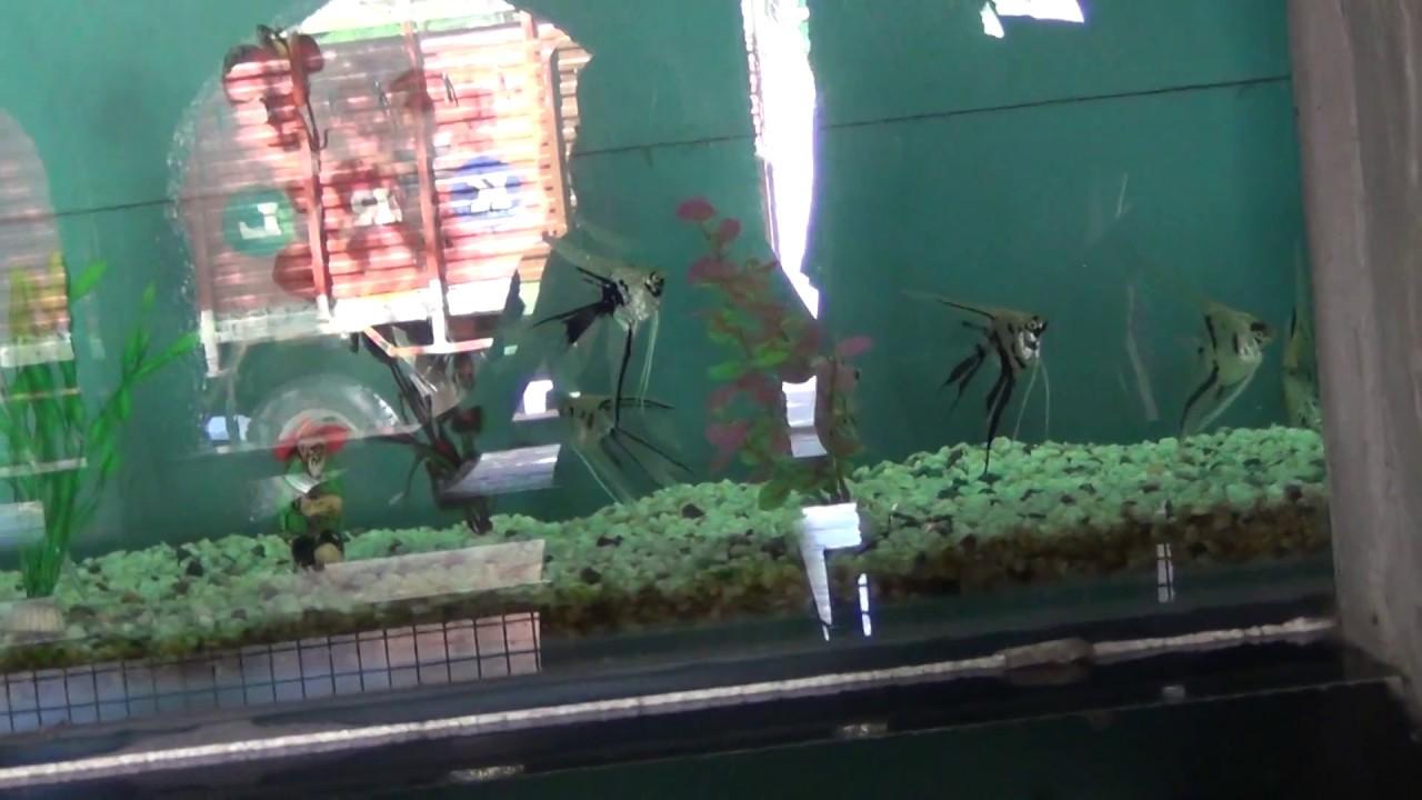 Fish aquarium in chandigarh - Rock Garden Chandigarh Fish Aquariums