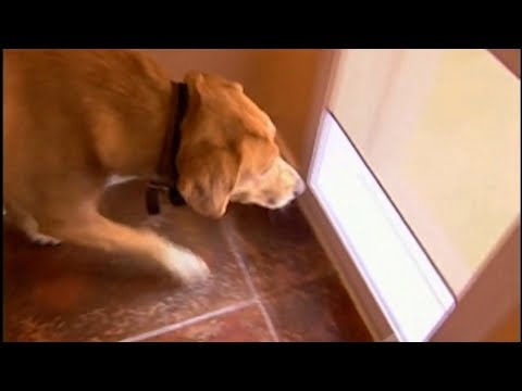 Power Pet Fully Automatic Pet Door Youtube