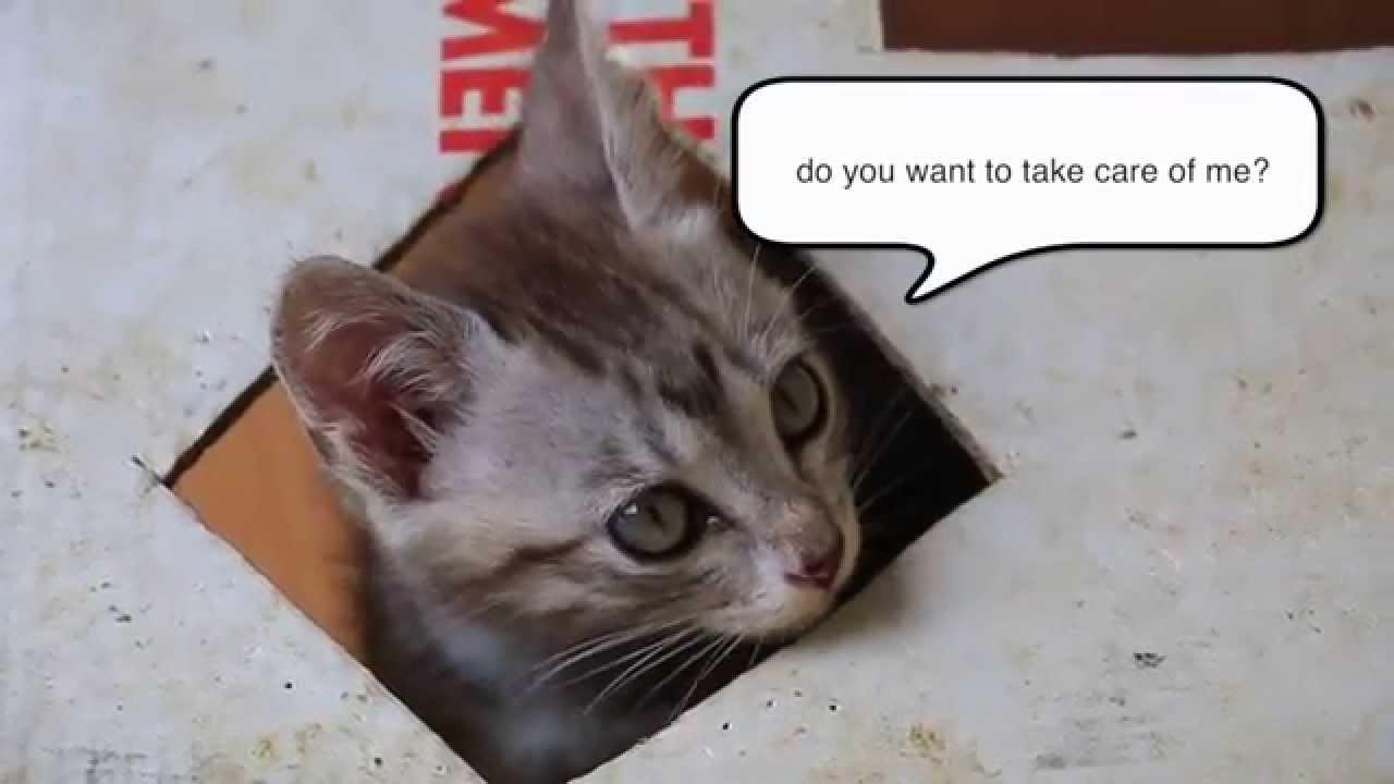 wood pellets for cat litter