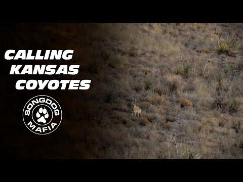 Coyote & Predator Hunting: CIMARRON SONG - KANSAS