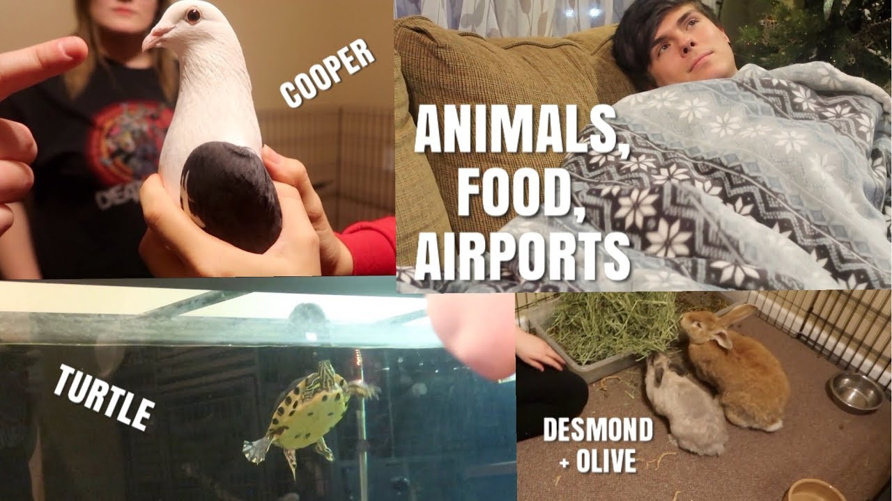 rabbits-birds-dogs-turtle-airport-and-food-vlogmas-day-8