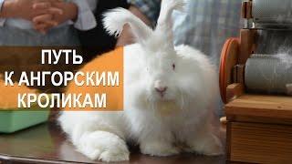 Лада Кирисенко. Путь к ангорским кроликам