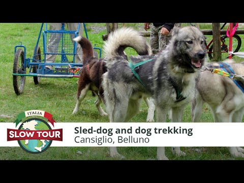 Cansiglio: Sled-dog and dog trekking | Italia Slow Tour