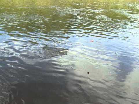 Chena River Ripping Lips