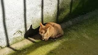 Чайка и коты
