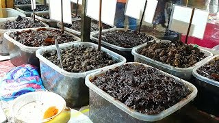 Amazing tasty and 100% Hygienic Pickles ( Achar ) | মুলা ও আদার আচার | Bengali Street Food