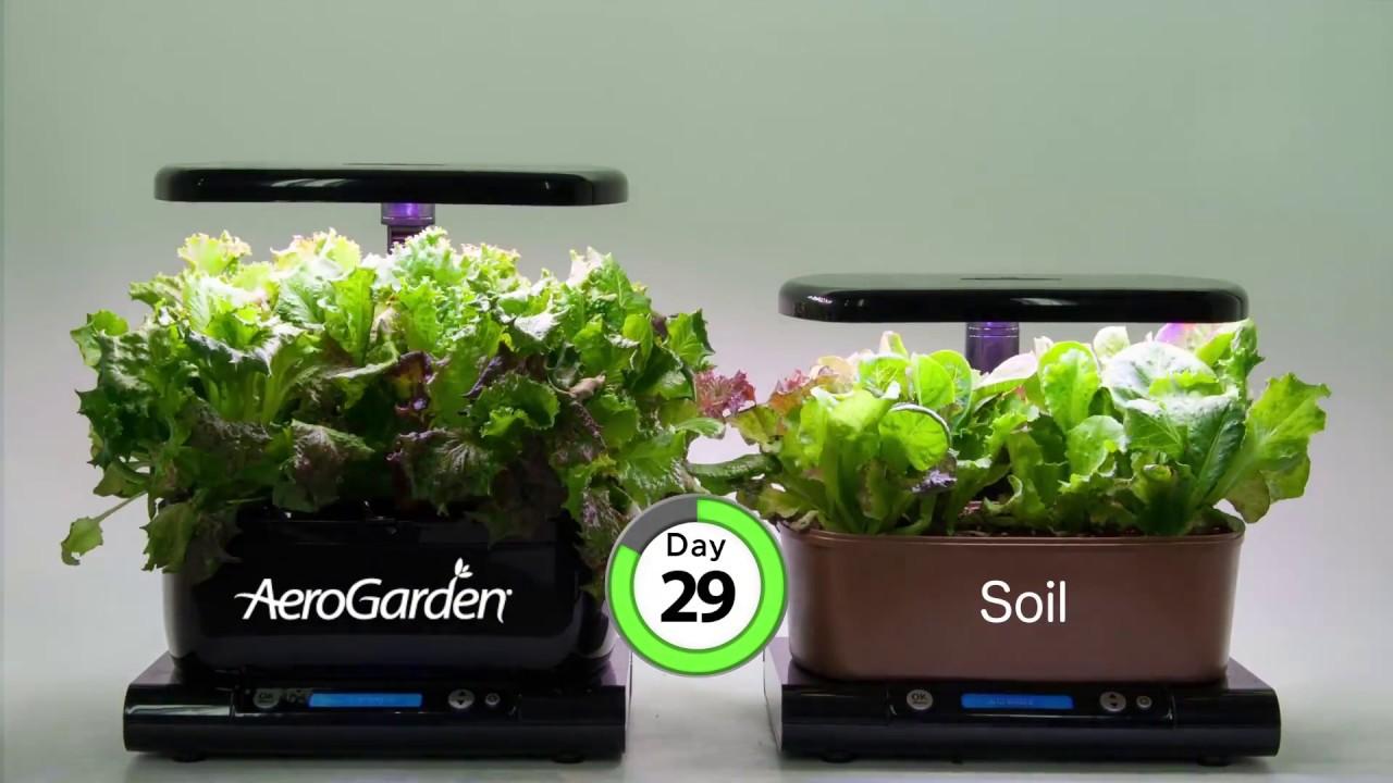 aero garden com. AeroGarden Harvest Time Lapse Aero Garden Com