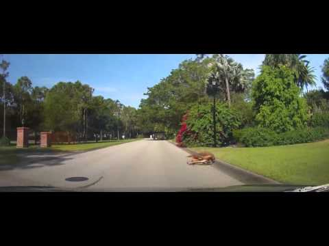 Driving around Wealthy Neighborhoods of South Fort Myers, FL