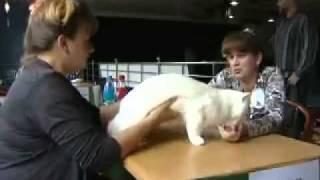 Самый большой кот в Амурской области