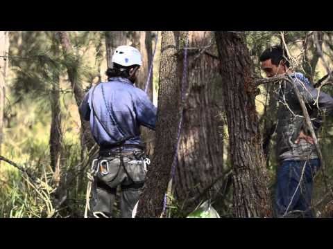 A short film highlighting the work undertaken by the Southern Highlands Koala Project Team protecting our local koala population.
