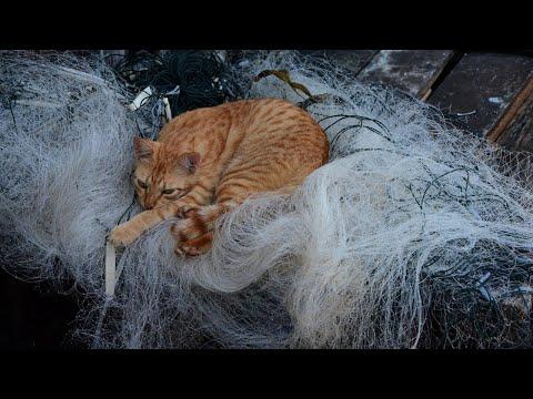 Кот сильно линяет причины за 6 мая
