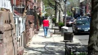 Abc's Of Dog Training Llc, Training Dogs All Over Queens, Bronx, Staten Island, Brooklyn, Long Islan