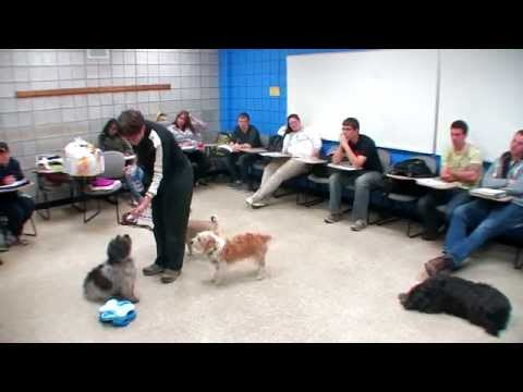 Examples of Classical and Operant Conditioning with Dogs