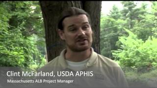 What efforts are currently underway in MA to find the ALB?