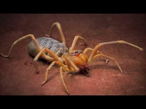 Лучшие народные средства от укусов различных насекомых
