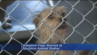 Adoption Fees Waived At Stockton Animal Shelter This Weekend