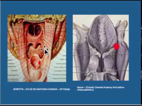classificação tnm cancer de prostata