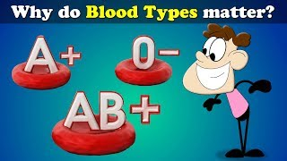 Why do Blood Types matter? | #aumsum
