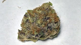 """Pink Champagne"" - (Strain Review)"