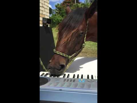 Horse enjoys playing piano with his mouth