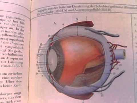 Anatomy and physiology the sensory organs the eye youtube anatomy and physiology the sensory organs the eye ccuart Image collections