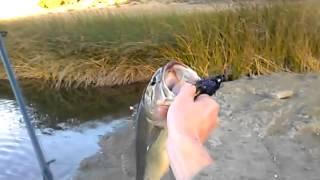2nd fish at cal poly