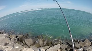 Triggerfish, Shark, Kingfish and Flounder Fishing in South Jersey