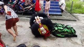 Atraksi Barongsai Mabuk by Singa Cemerlang Nanga Pinoh,Kabupaten Melawi