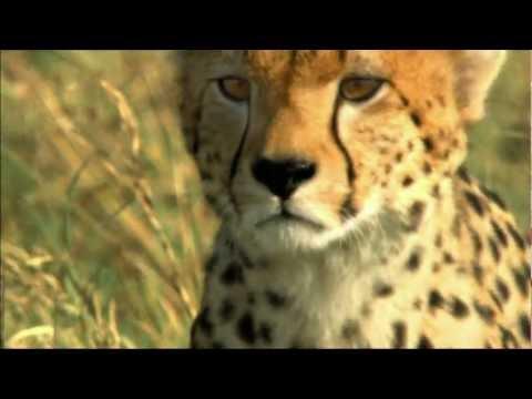 Busch Gardens Cheetah Hunt Commercial