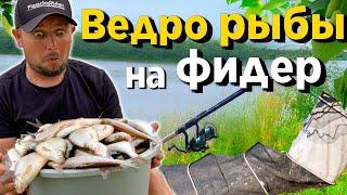 Как поймать много рыбы на ФИДЕР! Рыбалка с ночевкой 2020! Маринованные кабачки.