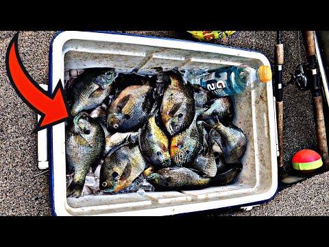 Fishing For BIG Bluegills!!   Wisconsin