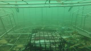 I dropped my crab trap at my marina. You won't believe what happened next.
