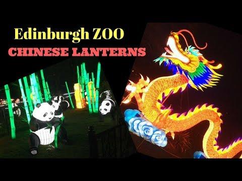 Tour of Edinburgh zoo Chinese Lanterns   Edinburgh attractions