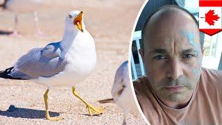 Hotel forgives man for seagulls trashing room 17 years ago - TomoNews