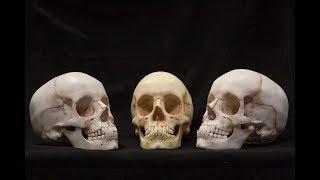 КОНКУРС!!! Как сделать череп настольный вариант или косплей