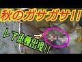 秋ガサガサ!#2  激流でレア魚種が‼︎ の動画、YouTube動画。