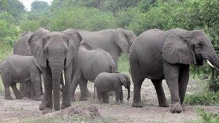 เพลงช้าง ช้าง ช้าง น้องเคยเห็นช้างหรือเปล่า รวมเพลงเด็ก เพลงเป็ด เพลงม้า เพลง ก ไก่